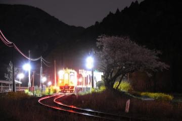 桜情景2012_駒鳴(10)