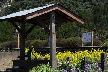 桜情景2012_駒鳴(11)