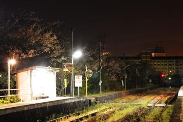 南風崎_夜桜(3)
