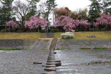 京都桜紀行2012(3)