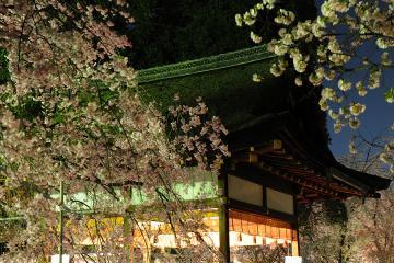 京都桜紀行2012(21)