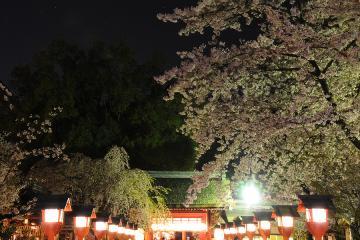 京都桜紀行2012(22)