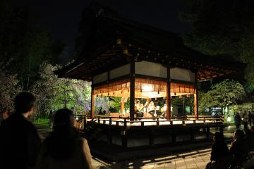 京都桜紀行2012(23)