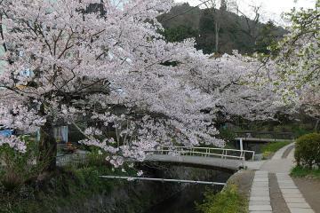 京都桜紀行2012(30)