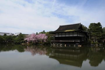 京都桜紀行2012(49)