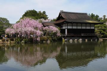 京都桜紀行2012(50)