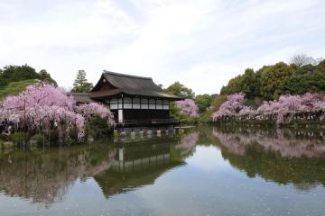 京都桜紀行2012(51)
