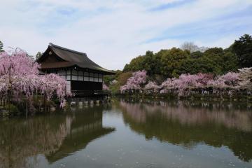 京都桜紀行2012(52)