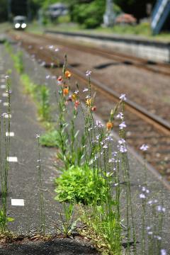 渋木駅(25)