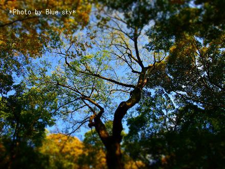 糺の森-見上げた空