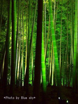 高台寺-竹林