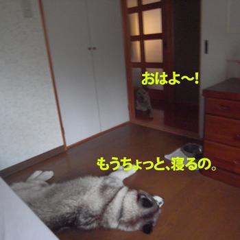R0012405.jpg