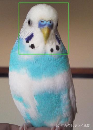 顔検出機能