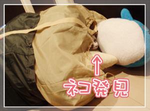 ネコとぬいぐるみ04