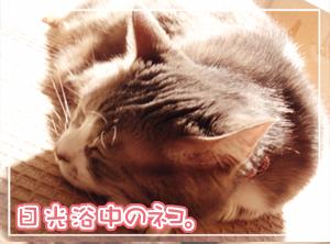 ネコと水草02