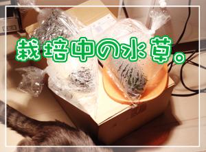 ネコと水草01