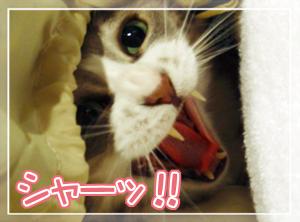 ネコとぬいぐるみ01