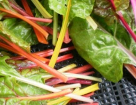 野菜の色か?