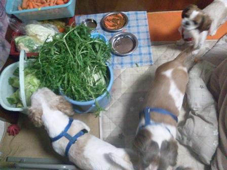 水菜 食べてる!?