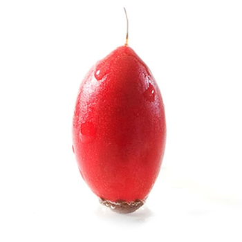 20100112-miraclefruit.jpg