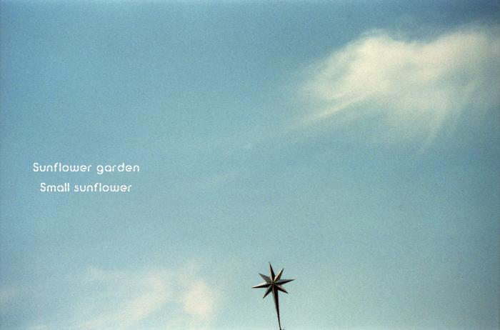 Sunflower garden7