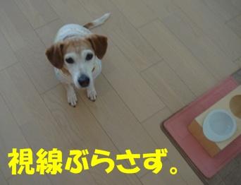 11_05_15_01.jpg