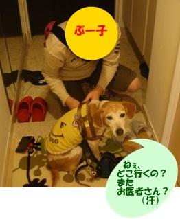 11_06_18_b01.jpg