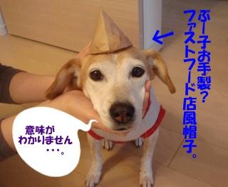11_09_12_05.jpg