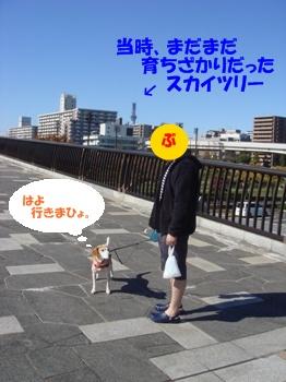 11_11_03_06.jpg