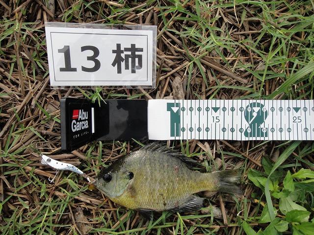 0921りゅうせいパパ-3