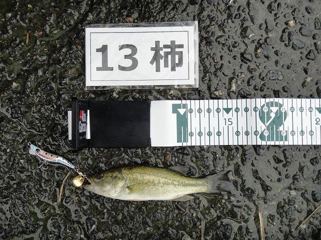 1018りゅうせいパパ-3