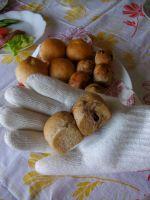 7月2日ミニミニココア食パン