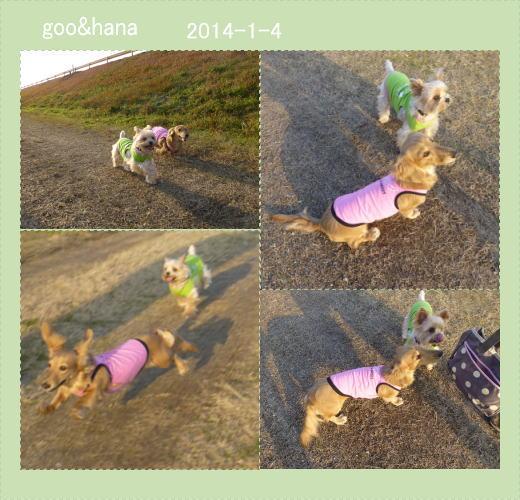 goohana140104.jpg
