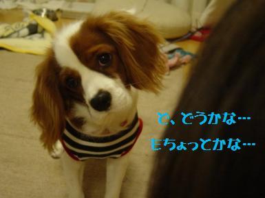DSC00920_20101201114542.jpg