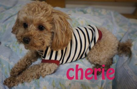 cherie 2_1