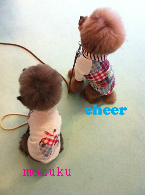 cheer_1.jpg