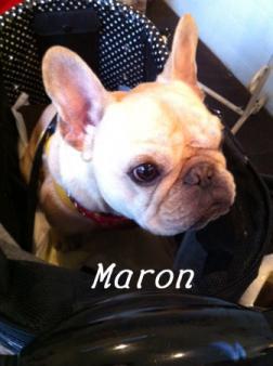 maron1_1.jpg