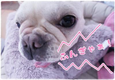 ちぇる応援1