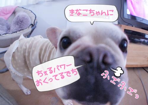 ちぇる応援2