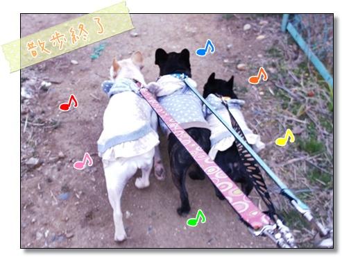 3ブヒ散歩♪