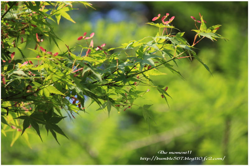 shinryoku1.jpg