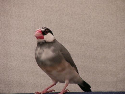 野鳥P1090385