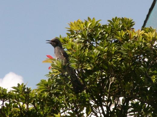 野鳥P1090251