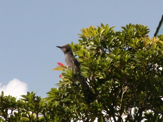 野鳥P1090253
