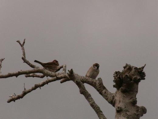 野鳥P1090237