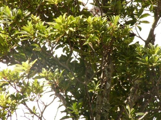 野鳥P1090248