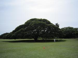 1.ハワイ④