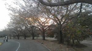 1.運動公園②