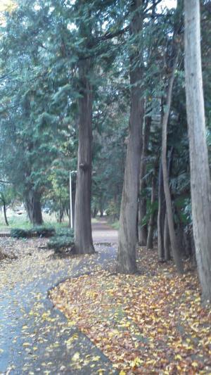 1.日光杉並木①20111202100823_convert_20111202130404