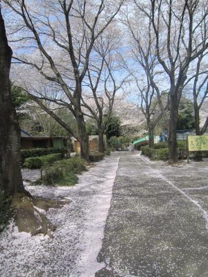 1.智光山公園②